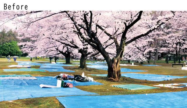 sakura-japan-tatami-sheet-cherry-blossoms-hanami-picnic-felissimo-japanese-travel-new-shopping-buy-purchase-ranking-reviews-2.jpg