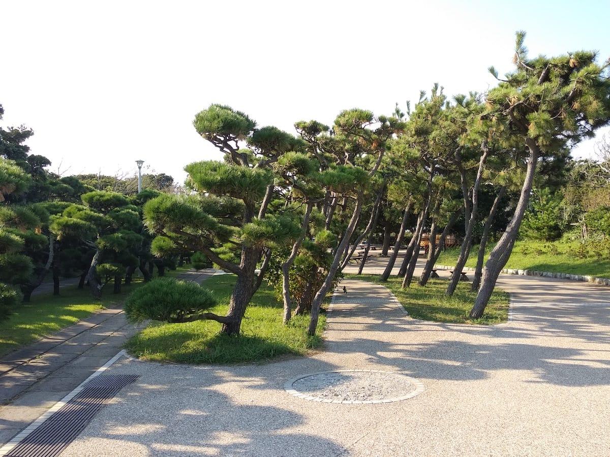 Jogashima_4.jpg