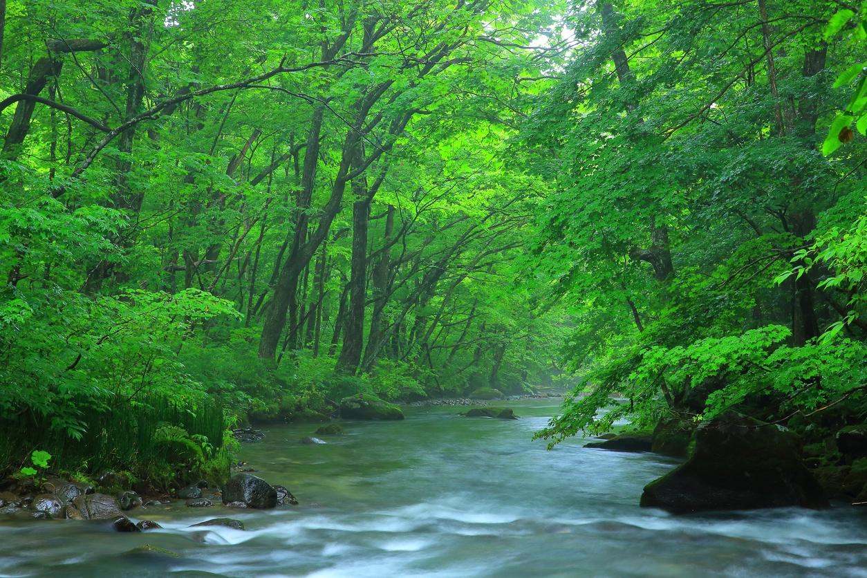 Oirase-Stream-in-Aom.jpg