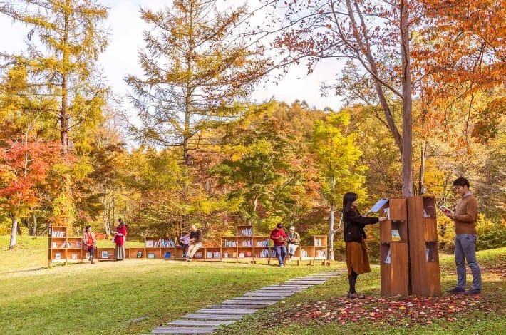 autumn-library-path.jpg