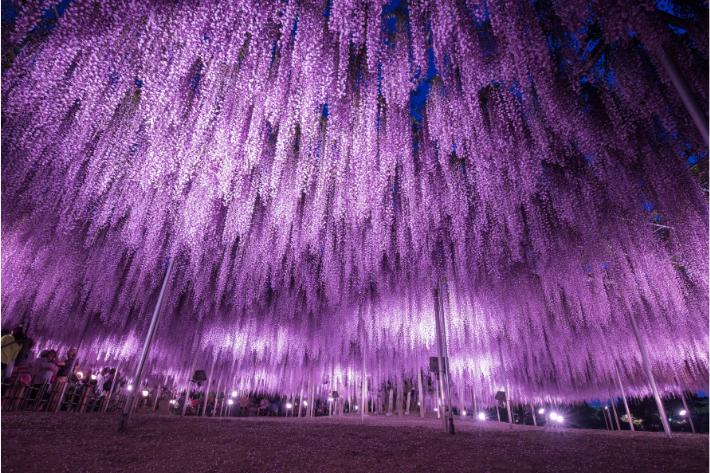 4_ashikaga.jpg