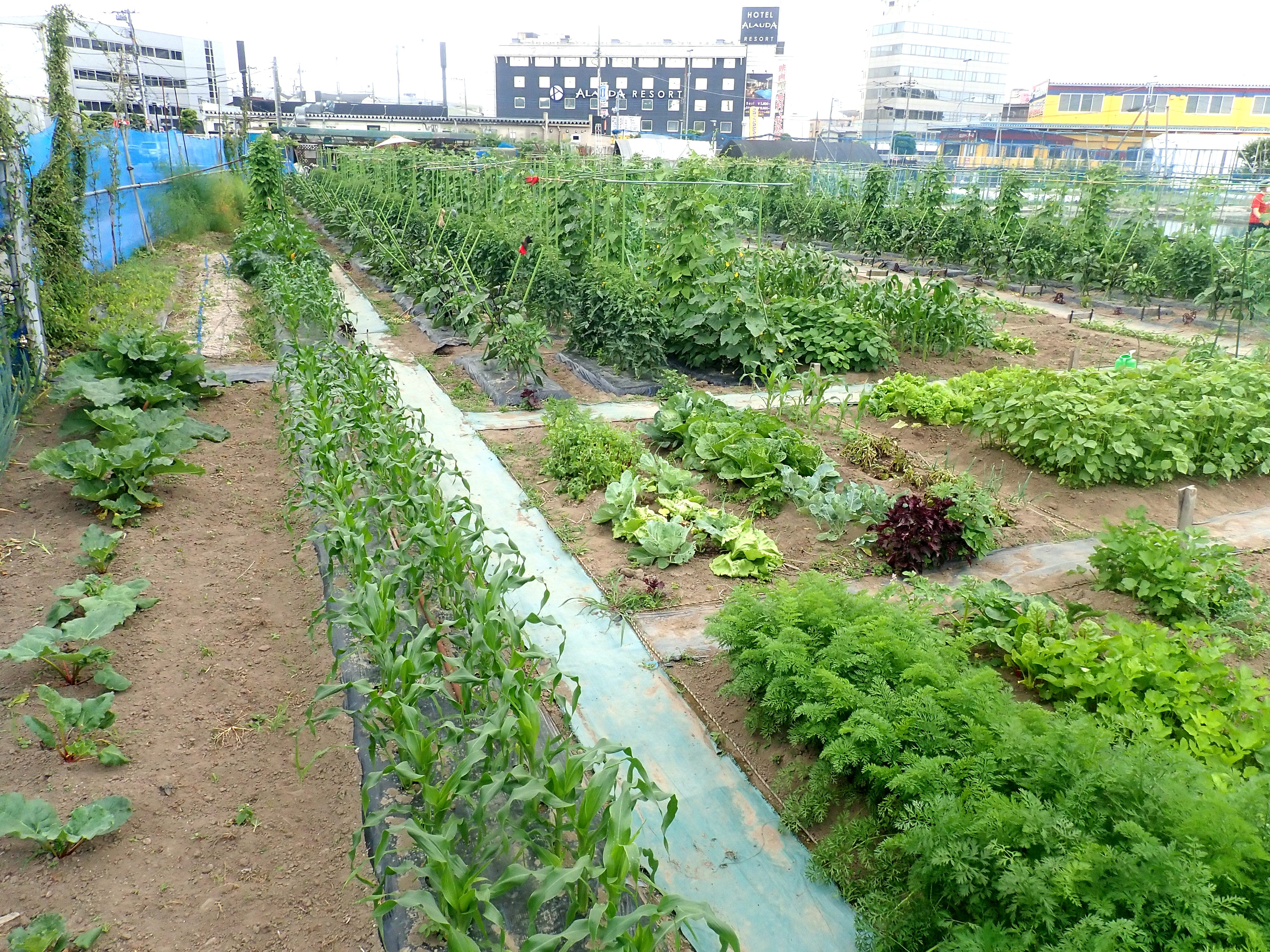 Here's-How-To-Join-A-Community-Garden-In-Tokyo-1.jpg