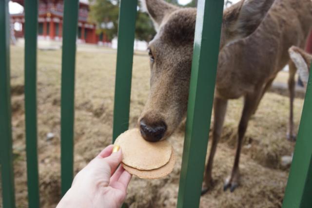 奈良鹿遊客冠狀病毒大米餅乾依賴成癮飲食食物旅行公園日本動物日本新聞.png