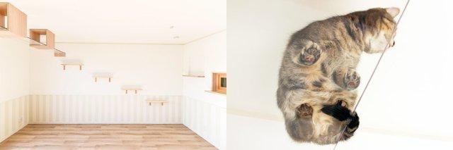 cat-friendly-apartment-house-japan-cute-felissimo-cats-kawaii-love-pets-animals-kobe-rent-2.jpg